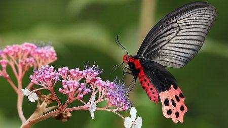butterfly, flower, grass