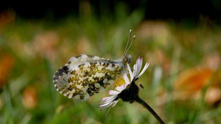 butterfly, flower, plant