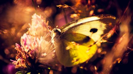 butterfly, flower, shade