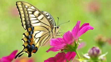 butterfly, flowers, color