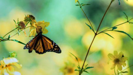 butterfly, flowers, grass