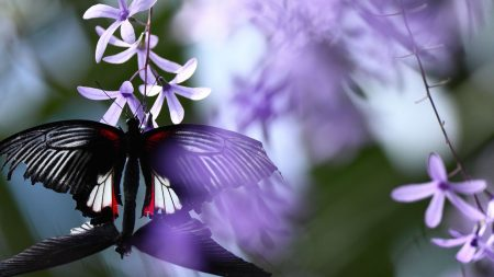butterfly, flowers, petals