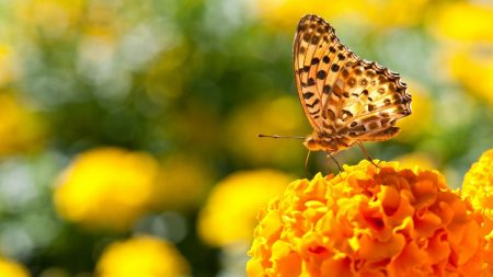 butterfly, flowers, surface
