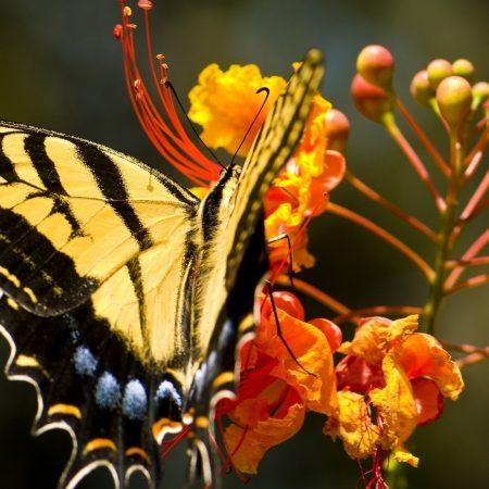 butterfly, grass, flower