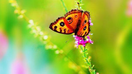 butterfly, grass, flowers