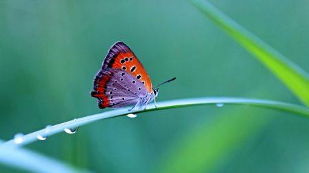 butterfly, grass, wings