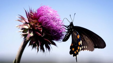 butterfly, insect, fly