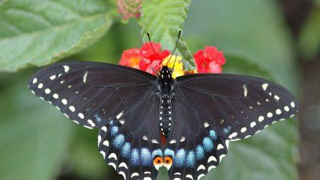 butterfly, leaf, flower
