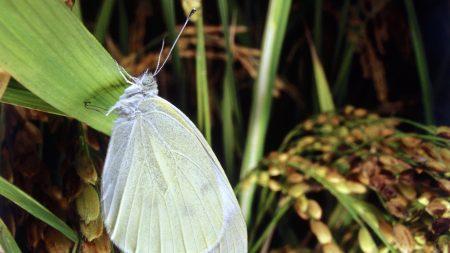 butterfly, leaf, grass