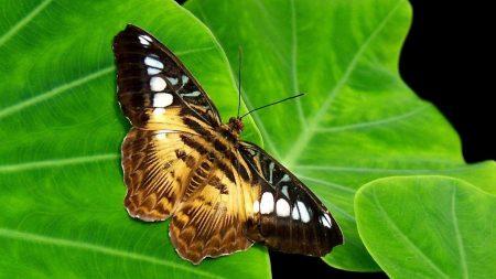 butterfly, leaf, pattern