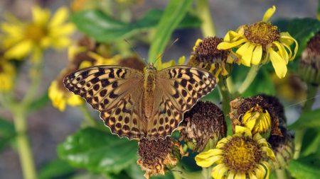 butterfly, leaves, plants