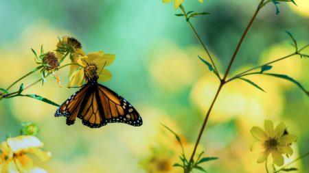 butterfly, macro, plants