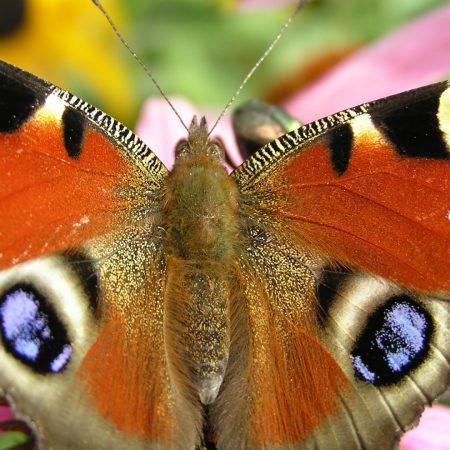 butterfly, patterns, grass