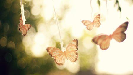 butterfly, plant, set