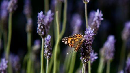 butterfly, purple, orange