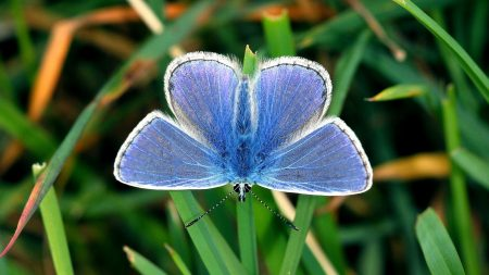 butterfly, small, wings