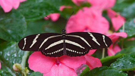 butterfly, striped, flower