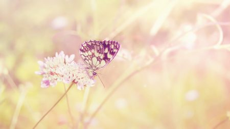 butterfly, summer, insect