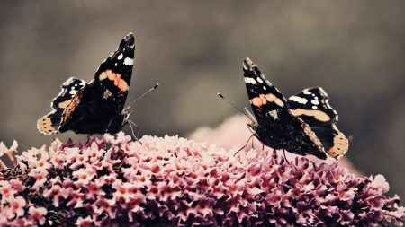 butterfly, surface, flower