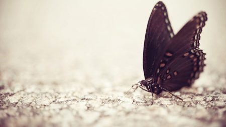 butterfly, surface, wings