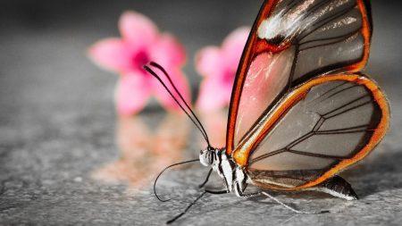 butterfly, wings, flower