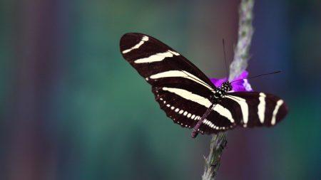butterfly, wings, flying
