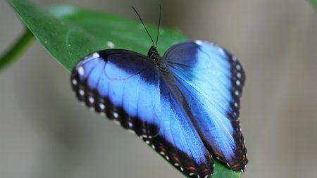 butterfly, wings, strips