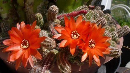 cactus, blooms, spikes