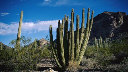 cactus, thorn, desert