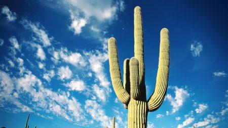 cactus, thorns, desert