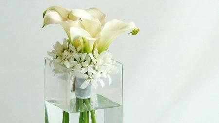 calla lilies, flowers, white