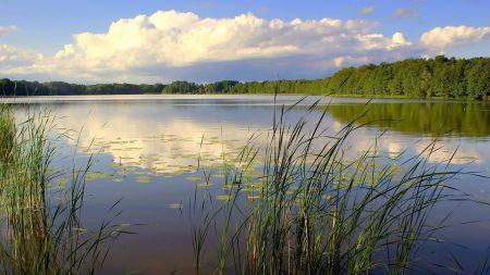 canes, lake, wood