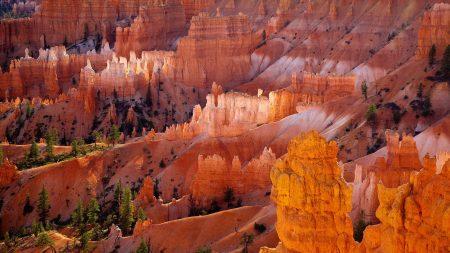 canyons, desert, trees