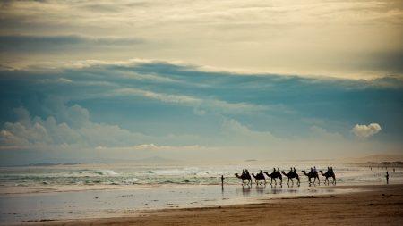 caravan, camels, sea
