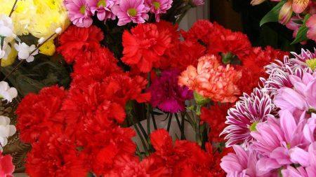 carnation, alstroemeria, chrysanthemums
