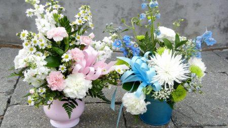 carnations, daisies, chrysanthemums
