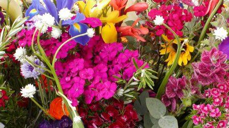 carnations, irises, lilies
