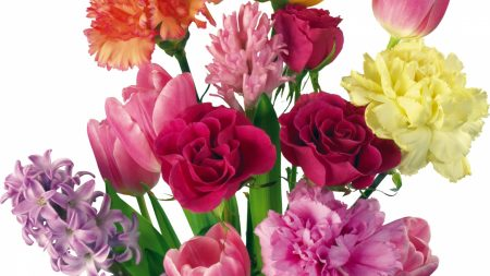 carnations, roses, tulips