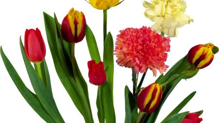 carnations, tulips, bouquets