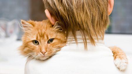 cat, baby, hugs