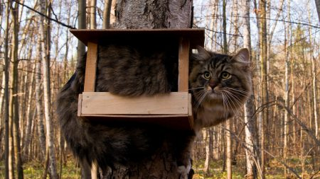 cat, bird-house, sit