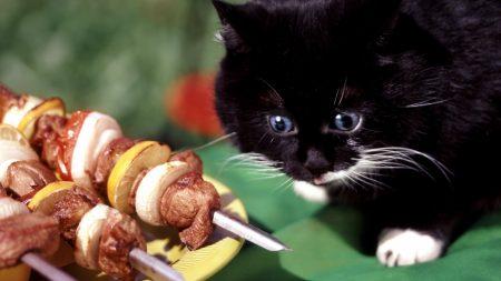cat, black, shish kebab