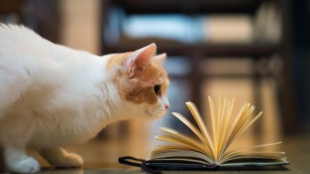 cat, book, curiosity