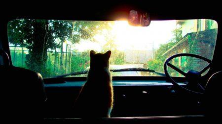 cat, car, glass