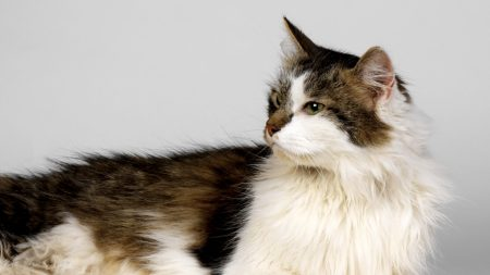 cat, cats, fluffy