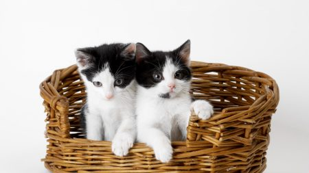 cat, cats, kittens