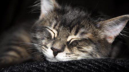 cat, cats, muzzle