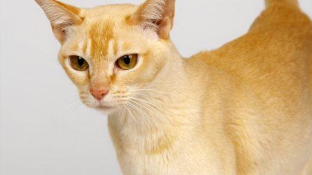cat, cats, orange