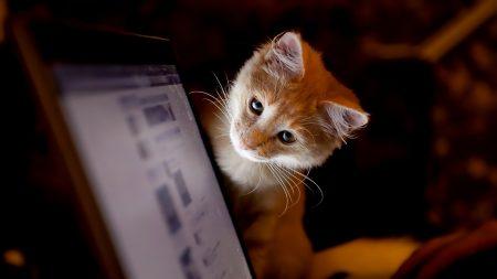 cat, computer, curiosity
