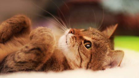 cat, cute, striped